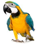 A picture named parrot.jpg