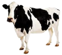 A picture named smallCow.png